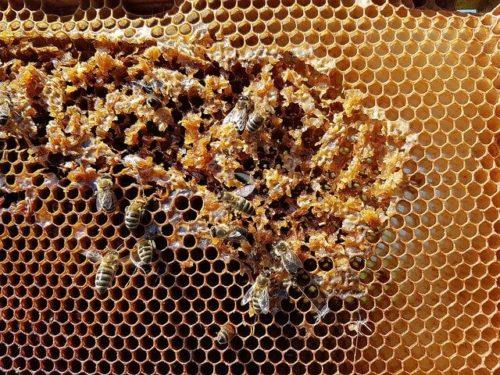 honeycomb fabric 500x375 - Bahan WAFFLE seperti apa? Contoh gambar dan karakteristik kain waffle